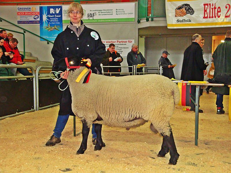 Niedersächsische Züchter erfolgreich auf Eliteauktion