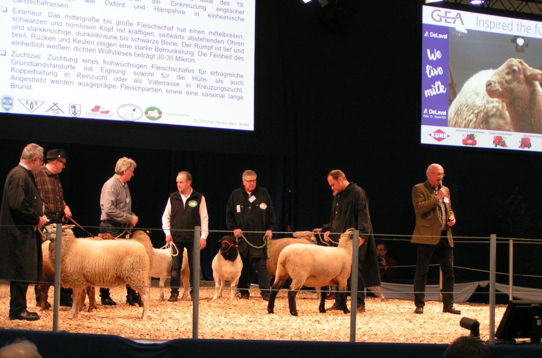 Schafzucht auf der EuroTier 2018