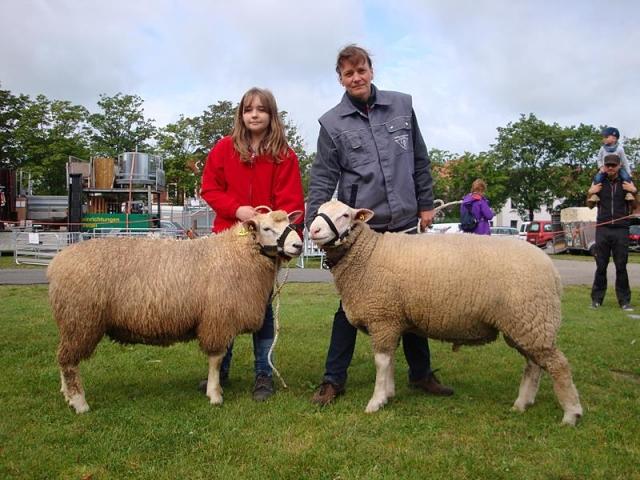 Schafauktionen für Wirtschaftsrassen