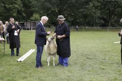Auszeichnung an Züchter St. Blömer