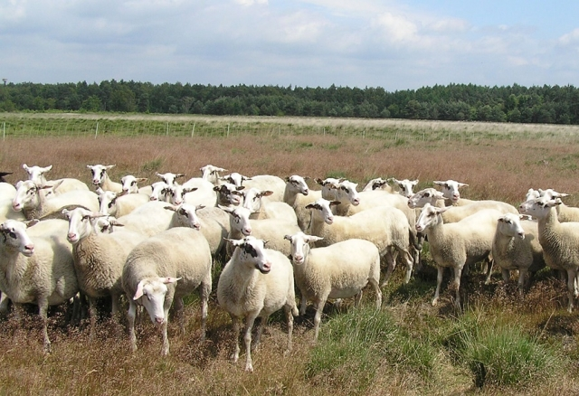 25.Bentheimer Landschafauktion - Katalog ist online