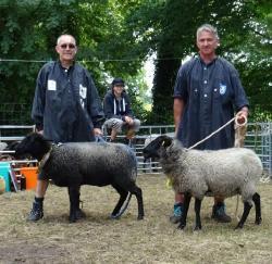 Sieger-und-Res-Sieger-Schafe